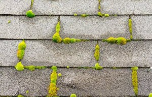 Alvin TX Roof Washing
