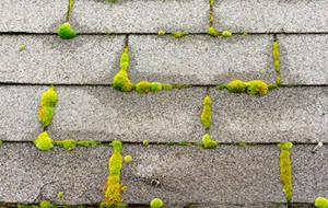 Moss And Algae Removal Service