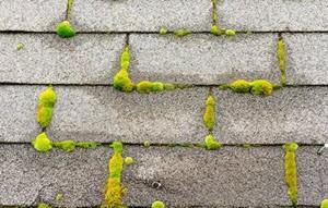 Rosharon Roof Washing